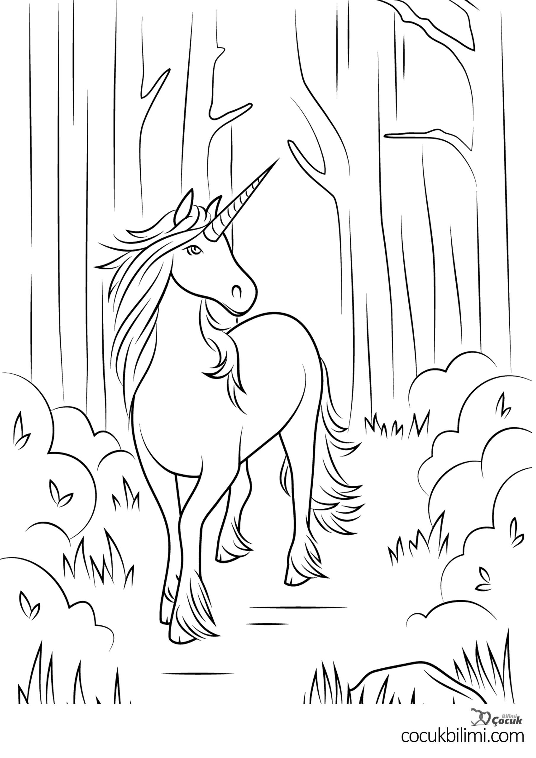 unicorn-boyama