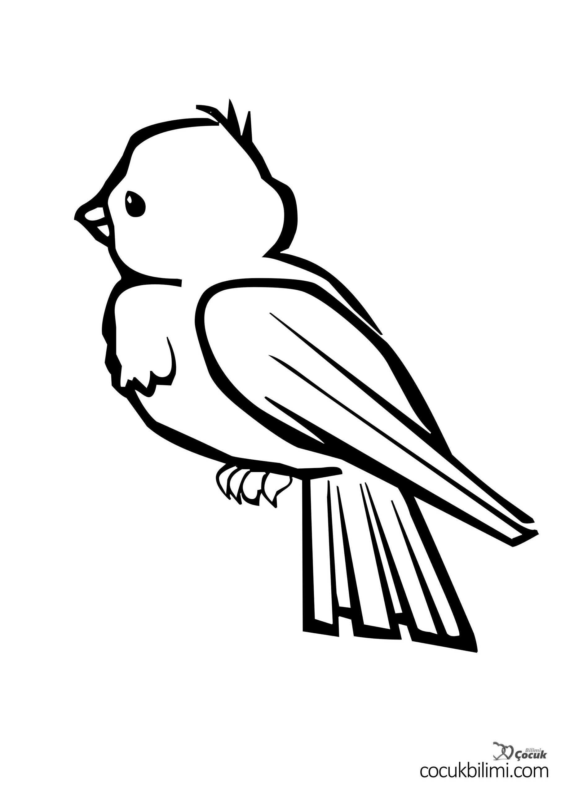 kuş-boyama